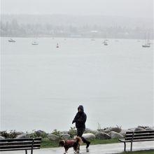 あいにくの雨の中、湾沿いを犬と散歩をする人もいた