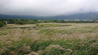仙石原湿原植物群落