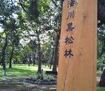 湯川黒松林