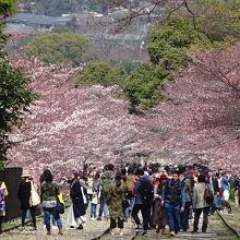 大津と京都を結ぶ琵琶湖疎水の「鉄道部分」がインクラインで、現在は線路だけが残っています。