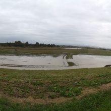 堤防の上からコスモス畑(だった河川敷)を見る