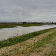 川に見えるが、コスモス畑のあった河川敷