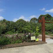 掛川城天守の麓にある花の公園