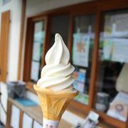 夏みかんソフトクリームをいただきました
