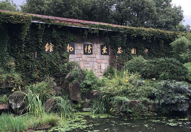 中国茶葉博物館