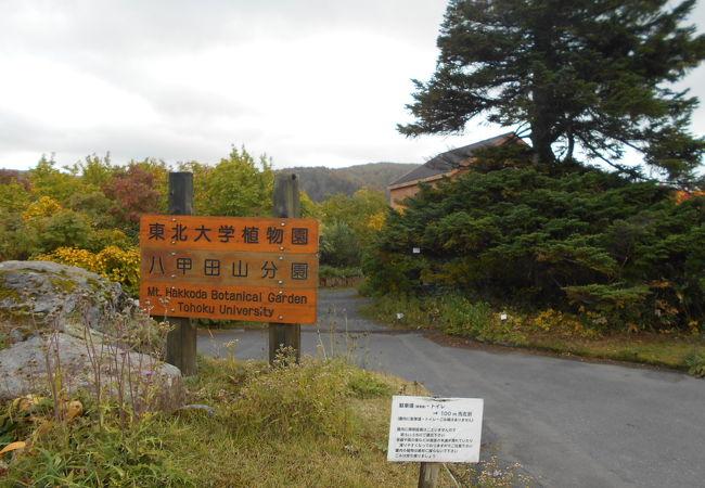 東北大学植物園八甲田山分園