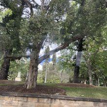広大な公園