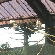 ゲ一ジ越しに朱鷺を見学