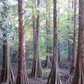 篠栗九大の森 行ってみました