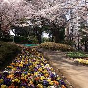 ソメイヨシノの花が咲く時期は、絶対見逃せない
