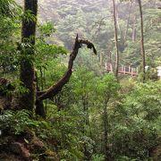脚力に少し自信がない人でも屋久島の自然美を堪能できる場所
