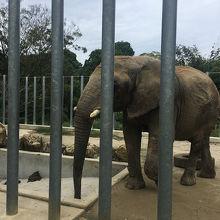 動物との距離が近いふれあい型動物園