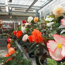温室内にも様々な花が咲いています