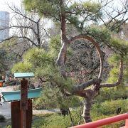 歌川広重の江戸百景にも描かれた松