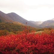 くじゅうの絶景ポイントの一つである「タデ原湿原」 ゆっくりと山や空を眺めにやってきました。