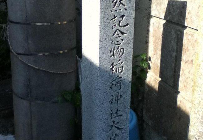 東光寺町稲荷神社のサカキ