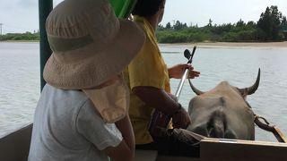 水牛車に揺られて~のんびりまったりな由布島観光