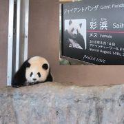 水族館でも動物園でもないけど、パンダもサファリもイルカショーもアニマルショーも楽しめる。