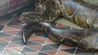 Snake Pagoda