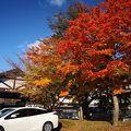 星野リゾートの紅葉が見頃でした