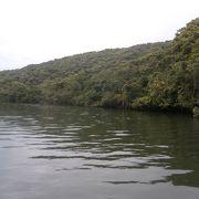 マングローブの森を楽しめます