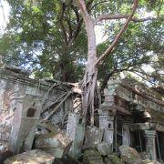 巨大樹木が建物を侵食