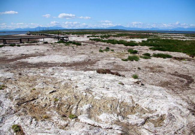 野付半島のトドワラ