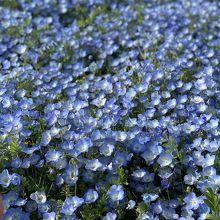 小さくて可愛らしい花でした
