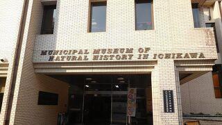 市立市川自然博物館