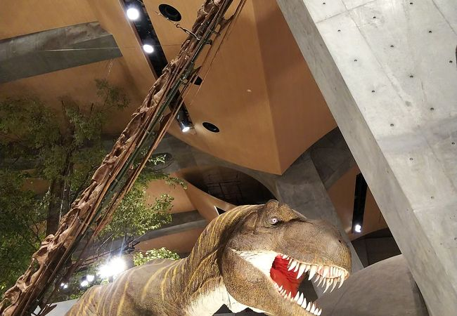 群馬県立自然史博物館