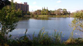 杁ケ池公園