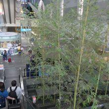造竹が植えられています