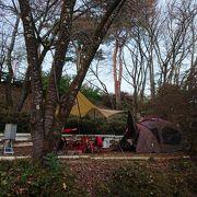 紅葉と冬桜のお花見キャンプ