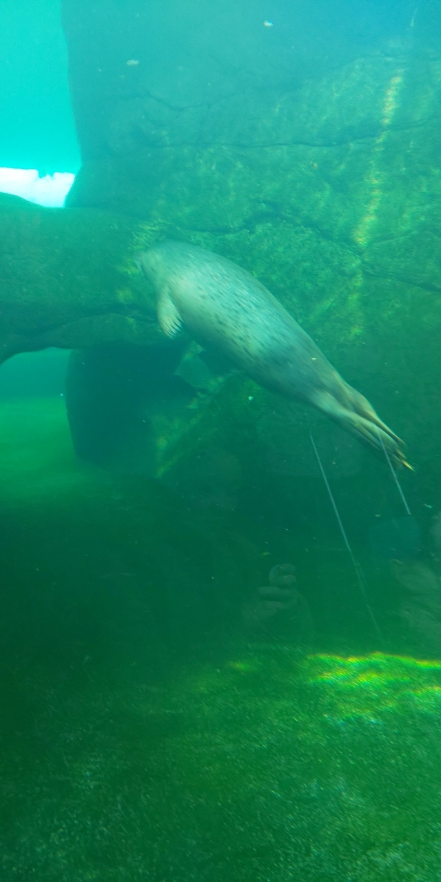 円山動物園 海獣舎