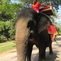 写真:アンコールトムの象乗り