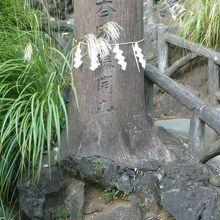 登山道を模した経路の入口に置かれている巨木の案内の石です。