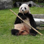パンダもいいけど、イルカのショーが素晴らしい