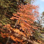 水面に映る紅葉が綺麗