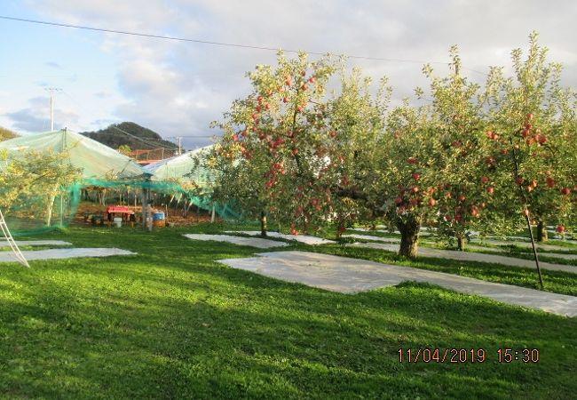 天童ふる里果樹園