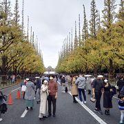 見ごろは12月に入ってから。人は多いが土日か平日午後のホコ天に行くべし。