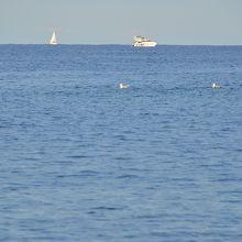 地中海の穏やかな水平線です