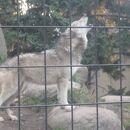 旭川市旭山動物園 オオカミの森
