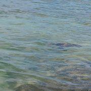 ウミガメを見ることができるということで有名なビーチ