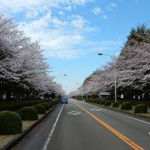 筑波農林研究団地