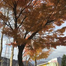 駐車スペースからの 秋の終焉間際の 紅葉