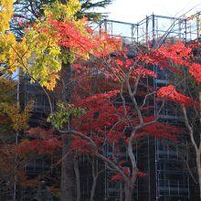 裏庭の紅葉が綺麗