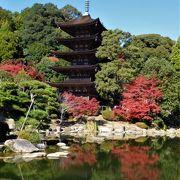 池の周りの紅葉や香山公園の紅葉が彩を添えていました。