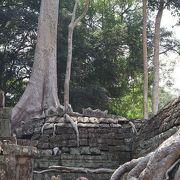 木の根っこが蛇のように建物に絡みついている