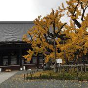 本願寺の銀杏