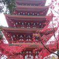 写真:金剛寺(高幡不動尊) 五重塔